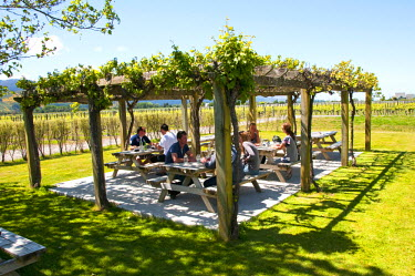AU02LFO0085 New Zealand, South Island, Marlborough, winery touring, tasting, and vineyards at Wairau Rivery Winery  Sauvignon Blanc and Pinot Noir wine