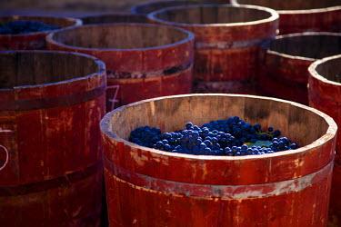 SPA4615 Bodega Lopez de Heria wine cellar in the village of Haro, La Rioja, Spain, Europe