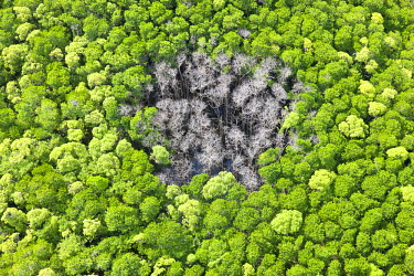 AS07201 Aerial view of rain forest with trees hit by lightning strike, Daintree Forest, Daintree National Park, nr Cairns, Queensland, Australia
