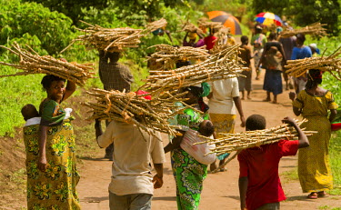 AR4441400030 Kibututu, North Kivu, Democratic Republic Of Congo: Great Lakes Cassava Initiative (Glci) Beneficiaries Walk Away Carrying The Cassava Seed They Received Following A Dissemination In The Village Of Ki...