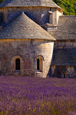 FRA7617 Blooming field of Lavender (Lavandula angustifolia) in front of Senanque Abbey, Gordes, Vaucluse, Provence-Alpes-Cote d'Azur, Southern France, France