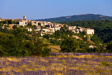 FRA7655 View of lavender and Sault, Vaucluse, Provence, France