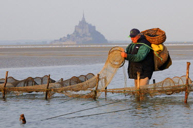 HMS371624 France, Manche, Bay of Mont Saint Michel, listed as World Heritage by UNESCO, Beach fisherman Guy Jugan lifting his nets full of crangon crangon shrimps at dawn