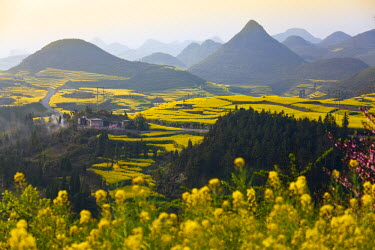 CH9820 China, Yunnan, Luoping. A small settlement surrounded by peach trees and mustard plants in blossom amongst the karst outcrops of Luoping.