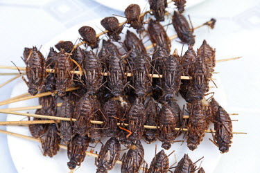 CH9909 China, Yunnan, Jianshui. Fried cockroaches for sale in Jianshui.