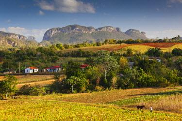 CB01172 Cuba, Pinar del Rio Province, Vinales, Vinales Valley