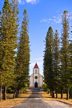 HMS360418 New Caledonia, Loyalty Islands, Ouvea island, Mouli peninsula, bordering the church pine columnar