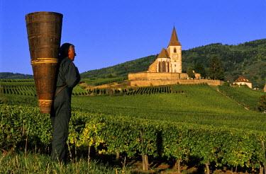 HMS083129 France, Haut Rhin, the Alsace Wine Route, Hunawihr Village, labelled Les Plus Beaux Villages de France (The Most Beautiful Villages of France), Christophe Kurtz grape picker with a wooden basket on hi...
