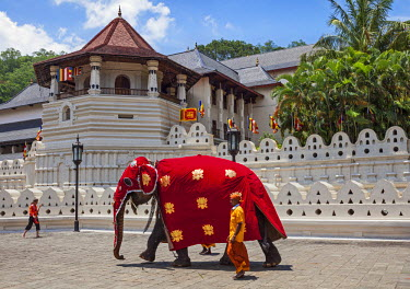 SRI1579 A magnificently caparisoned elephant outside the Temple of the Sacred Tooth Relic. This temple houses the tooth relic of Lord Buddha, which is venerated, Sri Lanka