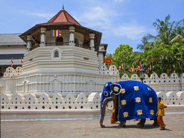 SRI1580 A magnificently caparisoned elephant outside the Temple of the Sacred Tooth Relic. This temple houses the tooth relic of Lord Buddha, which is venerated, Sri Lanka