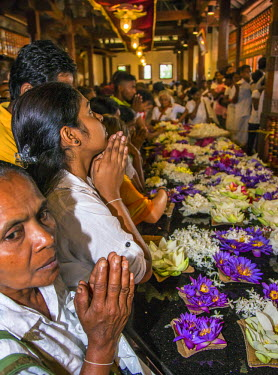 SRI1585 Devout Buddhists make offerings and pray at the Temple of the Sacred Tooth Relic. This temple houses the venerated tooth relic of Lord Buddha, Sri Lanka