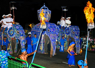 SRI1594 The Kandy Esala Perahera reaches a climax on the full moon of July/August in a most magnificent evening procession through the city�s streets, Sri Lanka