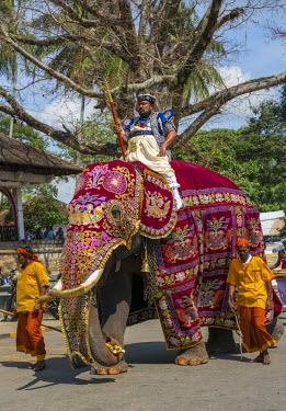 SRI1634 An important Temple official from the Temple of the Sacred Tooth Relic rides a caparisoned elephant dressed in traditional regalia to participate in the Kandy Day Perahera, Sri Lanka