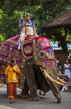 SRI1635 An important Temple official from the Temple of the Sacred Tooth Relic rides a caparisoned elephant dressed in traditional regalia to participate in the Kandy Day Perahera, Sri Lanka
