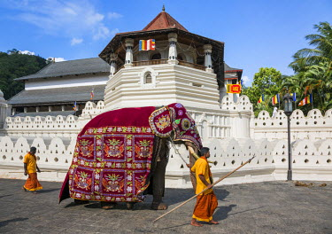 SRI1653 A Caparisoned elephant strides past the Temple of the Sacred Tooth Relic at the conclusion of the Kandy Day Perahera, Sri Lanka
