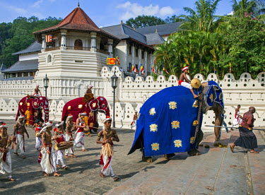SRI1654 Caparisoned elephants and their riders accompanied by Kandyan dancers and drummers stride past the Temple of the Sacred Tooth Relic at the conclusion of the Kandy Day Perahera, Sri Lanka