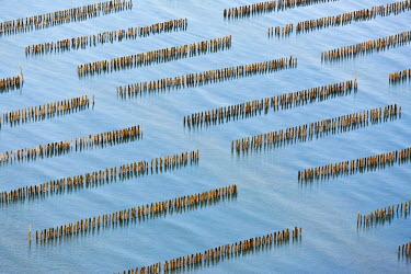 HMS460956 France, Vendee, La Faute sur mer, mussel poles farm (aerial view)