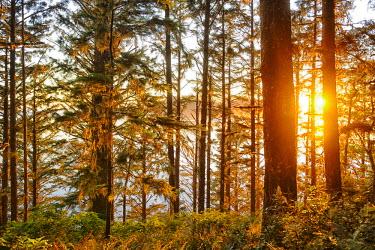 USA8624AW Forest at Cape Alava, Olympic National Park, Clallam County, Washington, USA