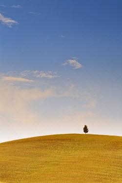 ITA1685AW Italy, Tuscany, Siena district, Orcia Valley. alone tree.