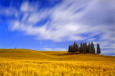 ITA1686AW Italy, Tuscany, Siena district, Orcia Valley, Cypress on the hill near San Quirico d'Orcia