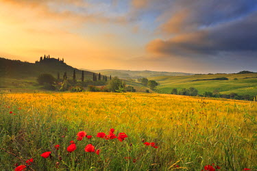 ITA1693AW Italy, Tuscany, Siena district, Orcia Valley, Podere Belvedere near San Quirico d'Orcia