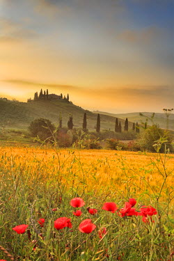ITA1694AW Italy, Tuscany, Siena district, Orcia Valley, Podere Belvedere near San Quirico d'Orcia