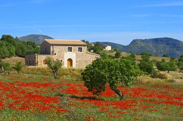 SPA4970AW Finca, Poppy Blossom, Majorca, Balearics, Spain