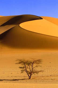 HMS0057085 Algeria, Sahara, the Tadrart, Sand Dunes of Ouan Zaouaten