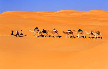HMS0078862 Mauritania, Adrar Region, hiking and camel caravans in the Mauritanian desert