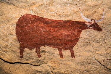 CHA0056 Chad, Gaora Hallagana, Ennedi, Sahara. An ancient rock painting of a cow on the wall of a sandstone rock shelter.