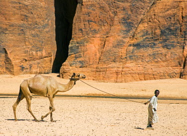 CHA0175 Chad, Wadi Archei, Ennedi, Sahara.  A young boy leads a camel on a rope.