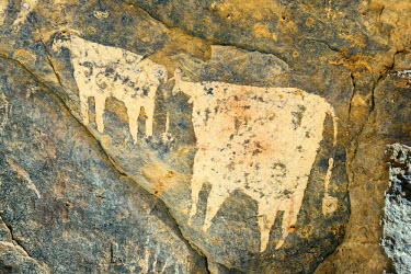 CHA0185 Chad, Wadi Archei, Ennedi, Sahara.  An ancient painting of two white bulls on the wall of a cave.