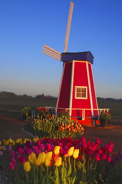 Wind Mill at the Tulip Festival, Woodburn, Oregon, USA