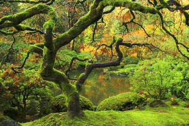 Portland Japanese Garden in Early Autumn: Portland Japanese Garden, Portland, Oregon, USA