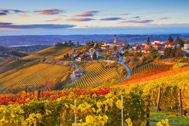 IT09277 Vineyards, Treiso, nr Alba, Langhe, Piedmont (or Piemonte or Piedmonte), Italy