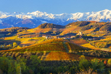 IT09272 Vineyards & castle, Grinzane Cavour, Cuneo district, nr Alba, Langhe, Piedmont (or Piemonte or Piedmonte), Italy