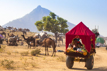 IN05374 India, Rajasthan, Pushkar, Pushkar Camel Fair, Indian tourists in camel cart