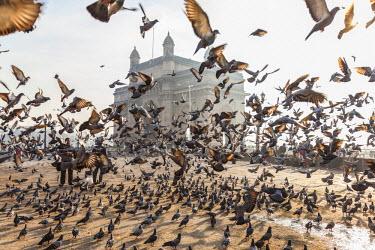 IN05522 Pigeons, India Gate, Colaba, Mumbai (Bombay), India