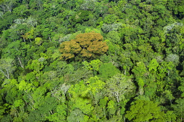 CAR0031 Central African Republic, Dzanga-Sangha, Bayanga.  An aerial photograph of the magnificent rainforest canopy near Bayanga.