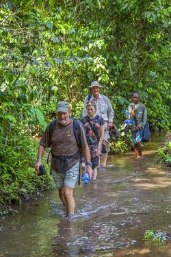 CAR0034 Central African Republic, Dzanga-Ndoki, Dzanga-Bai.  Visitors to Dzanga-Bai wade through a stream during their one-hour-long walk to the forest glade.