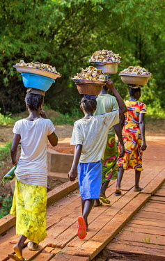 Central African Republic, Bayanga. Bayanga women cross a wooden bridge carrying bowls of wild mushrooms on their heads.