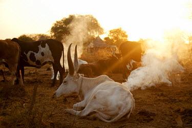SSU0006AW Northern Bahr el Ghazal, South Sudan. Dawn at a Cattle camp.