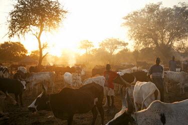 SSU0007AW Northern Bahr el Ghazal, South Sudan. Dawn at a Cattle camp.