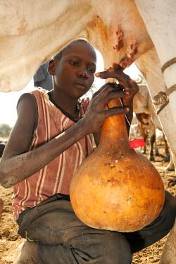 SSU0010AW Northern Bahr el Ghazal, South Sudan. Milking at a Cattle camp.