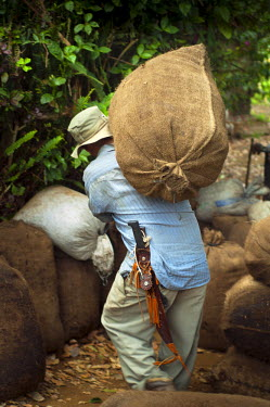 EL01047 El Salvador, Coffee Picker, Coffee Farm, Carrying Bag Of Coffee Cherries To Weighing Station, Slopes Of The Santa Ana Volcano, Finca Malacara, High Altitude Coffee