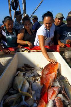 EL01099 La Libertad, El Salvador, Fish Buyers, Red Snapper, Fishing Boat, Fish Market, Pier, Pacific Ocean, Puerto De La Libertad, Port Of Freedom, Department Of La Libertad