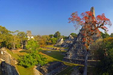 GUA1135AW Maya Archaeologial Site Tikal, Tikal National Park, Peten, Mundo Maya, Guatemala, Central America