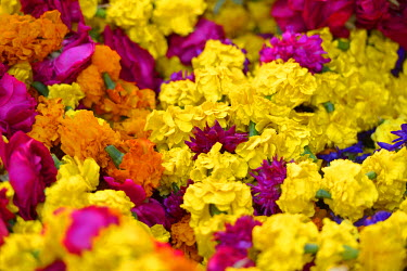 IND7263AW flowers in a market in Pushkar, India,Asia