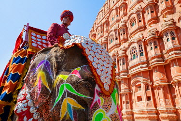 IN05524 India, Rajasthan, Jaipur, Ceremonial decorated Elephant outside the Hawa Mahal, Palace of the Winds, built in 1799, (MR)