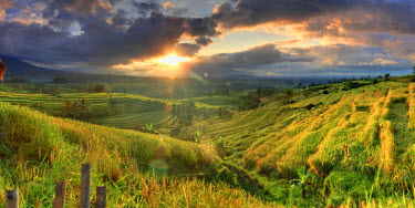 ID01508 Indonesia, Bali, Jatiluwih Rice Terraces